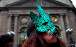 marihuana-comite-senado